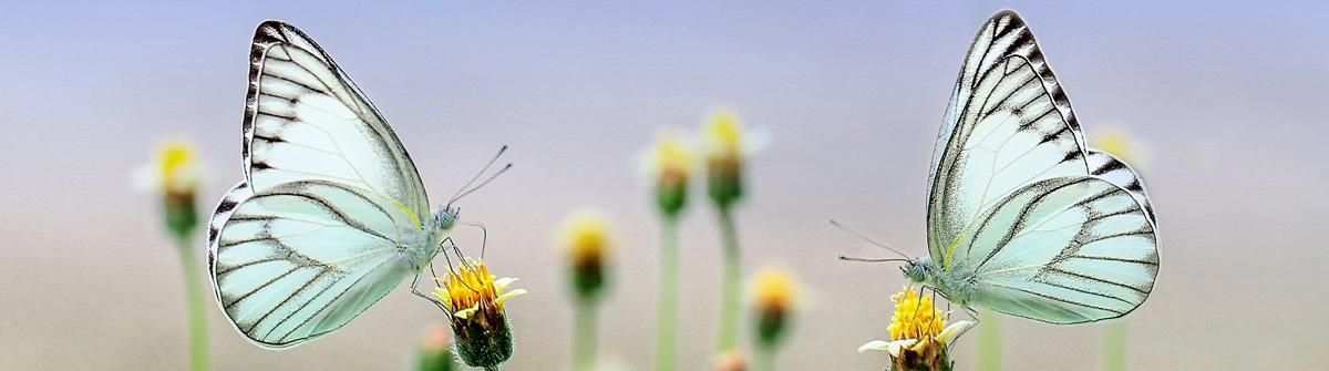Frühling by pixabay